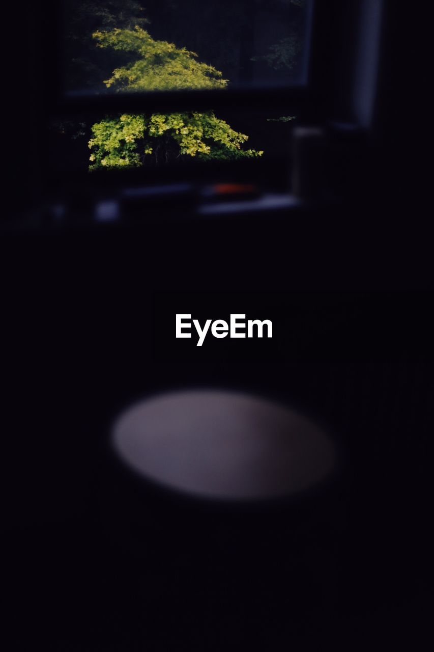 no people, close-up, indoors, night, illuminated, nature, black background