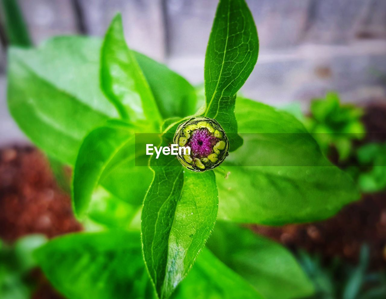 leaf, plant part, close-up, plant, growth, green color, beauty in nature, focus on foreground, nature, one animal, day, flower, no people, freshness, vulnerability, animal themes, fragility, invertebrate, animal wildlife, flowering plant, flower head