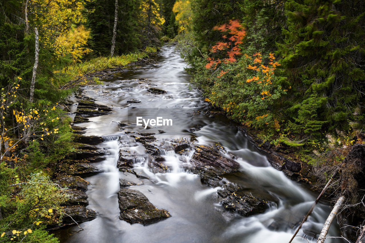 forest, plant, water, tree, scenics - nature, motion, long exposure, land, flowing water, beauty in nature, nature, no people, blurred motion, flowing, stream - flowing water, river, environment, day, outdoors, woodland, power in nature, running water