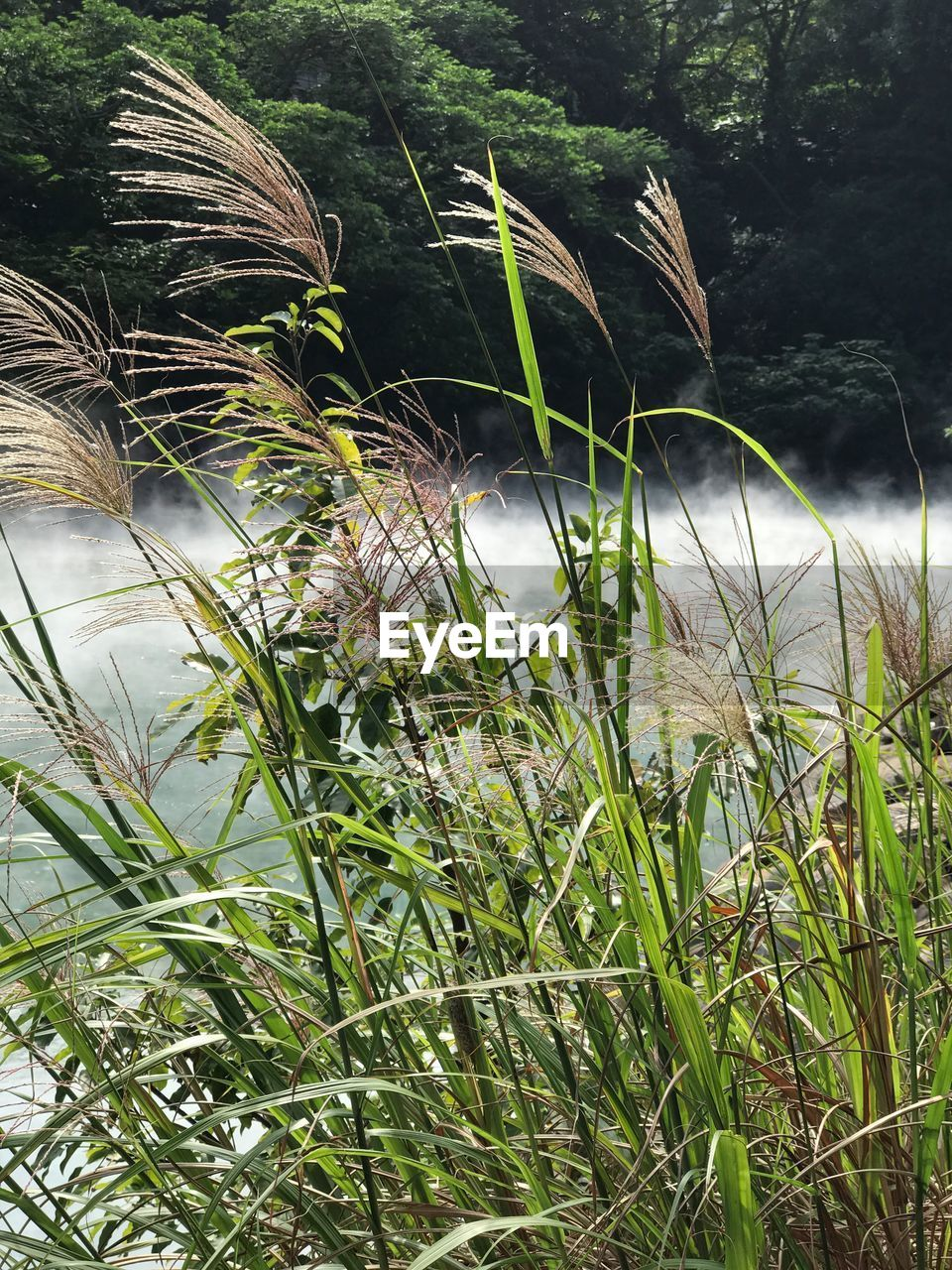 nature, growth, plant, no people, tranquility, water, day, tranquil scene, outdoors, grass, beauty in nature, river, green color, close-up, freshness