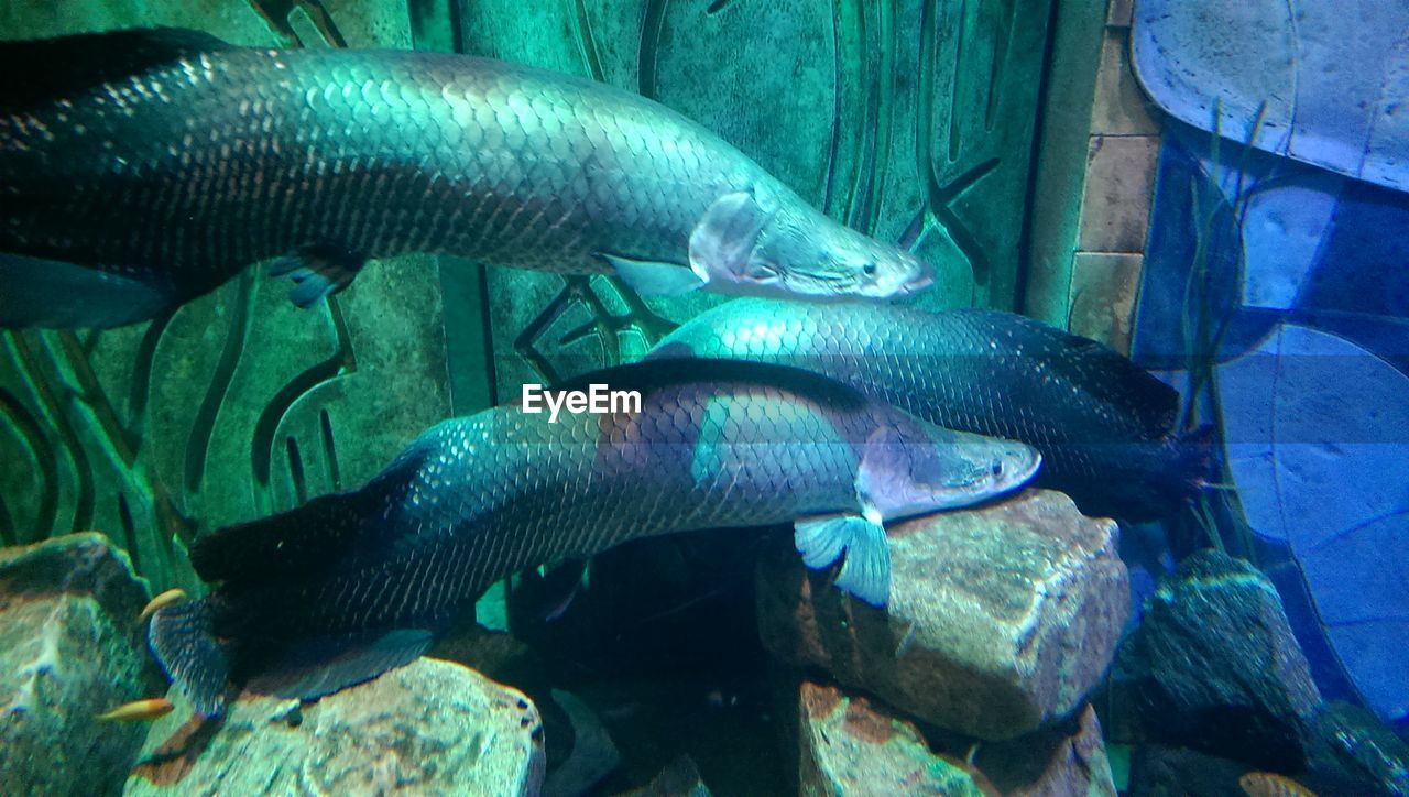 fish, water, animals in the wild, animal themes, no people, nature, sea life, day, swimming, outdoors, close-up, undersea