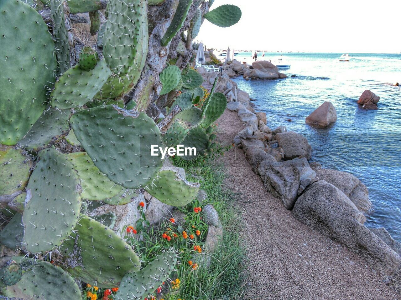 Cactus growing by sea