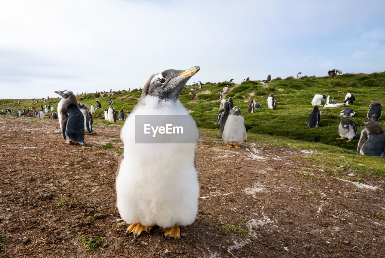 Penguins on land against sky