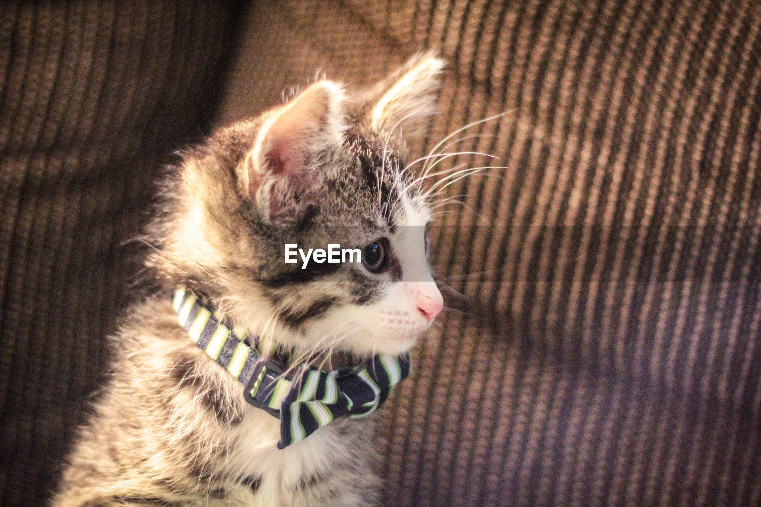 Close-up of kitten on sofa