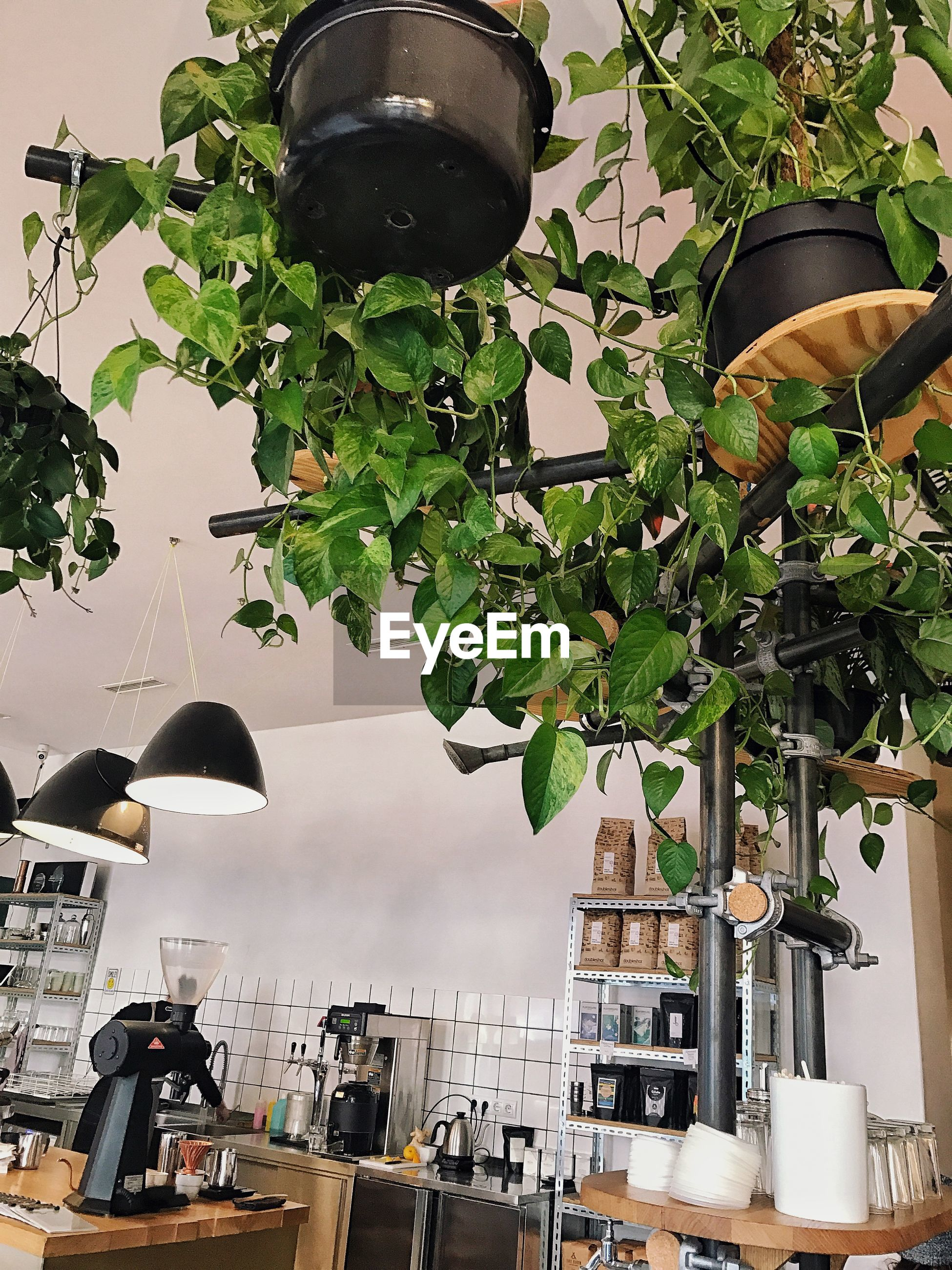 LOW ANGLE VIEW OF POTTED PLANTS HANGING ON BUILDING
