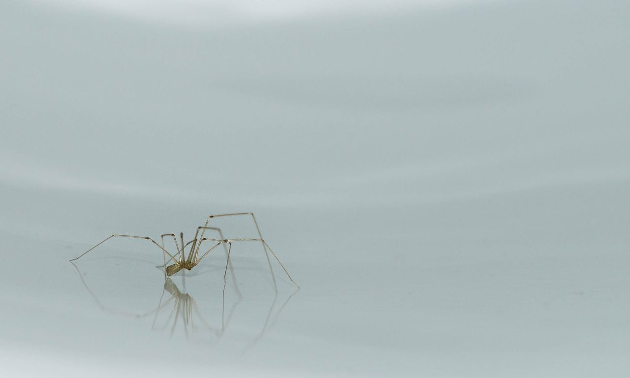 animal themes, animal, animal wildlife, invertebrate, insect, one animal, animals in the wild, no people, copy space, nature, mosquito, outdoors, day, arachnid, close-up, arthropod, spider, studio shot, white background