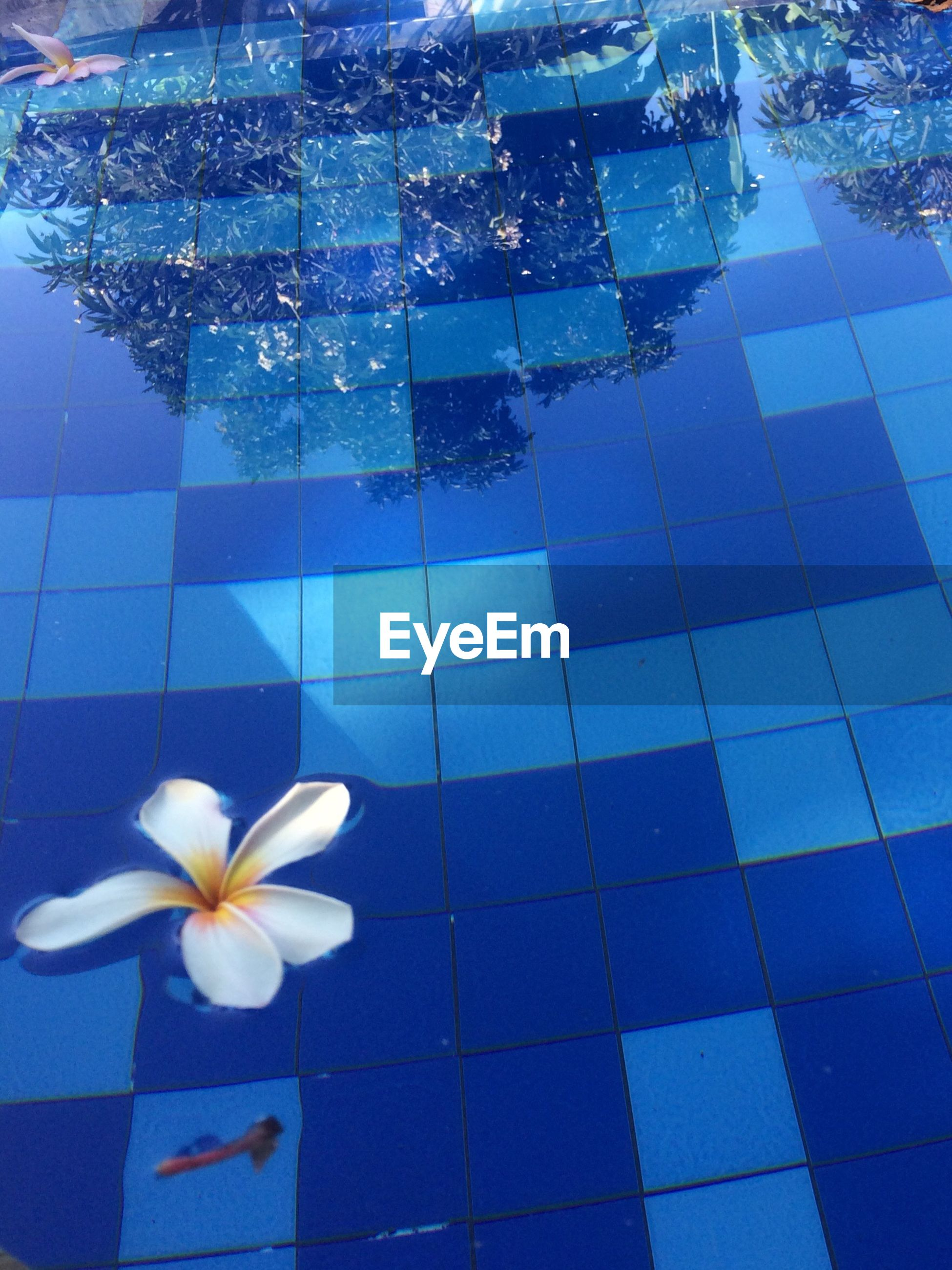 tile, tiled floor, flower, swimming pool, reflection, no people, outdoors, nature, day, beauty in nature, fragility, close-up, flower head