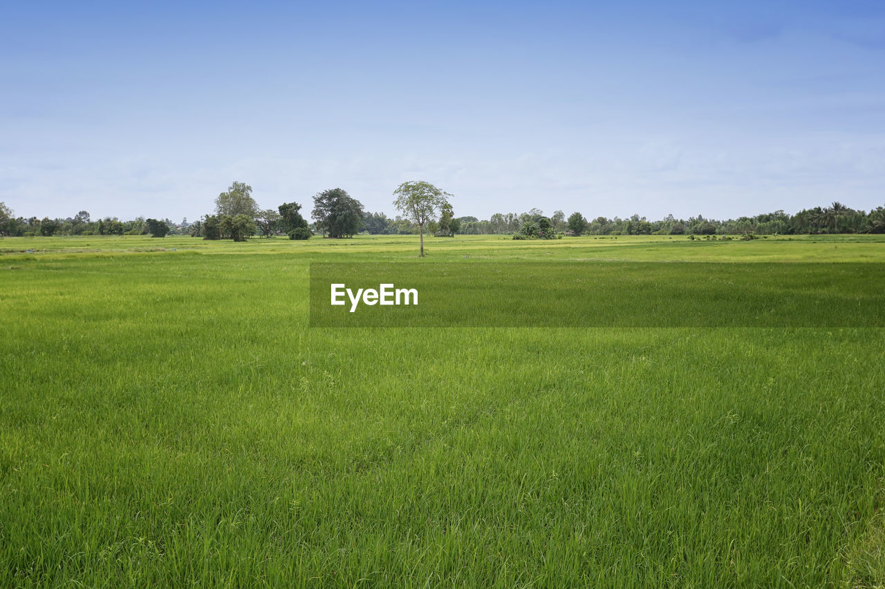 grass, plant, landscape, tranquil scene, green color, environment, field, scenics - nature, land, tree, sky, tranquility, beauty in nature, nature, no people, non-urban scene, day, growth, idyllic, rural scene, outdoors