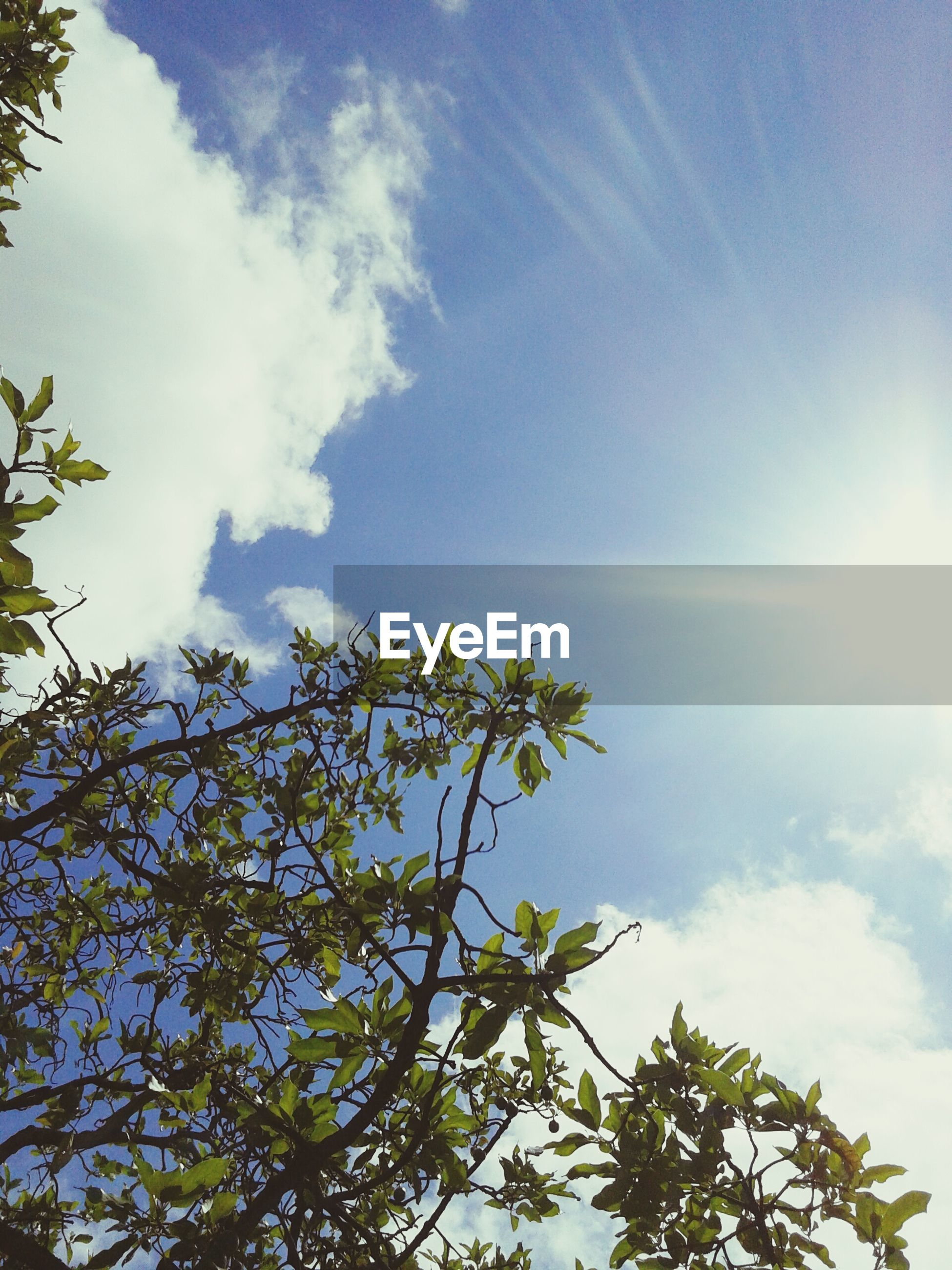 low angle view, tree, sky, sun, sunlight, growth, sunbeam, branch, nature, cloud - sky, beauty in nature, tranquility, blue, lens flare, cloud, day, sunny, outdoors, no people, scenics