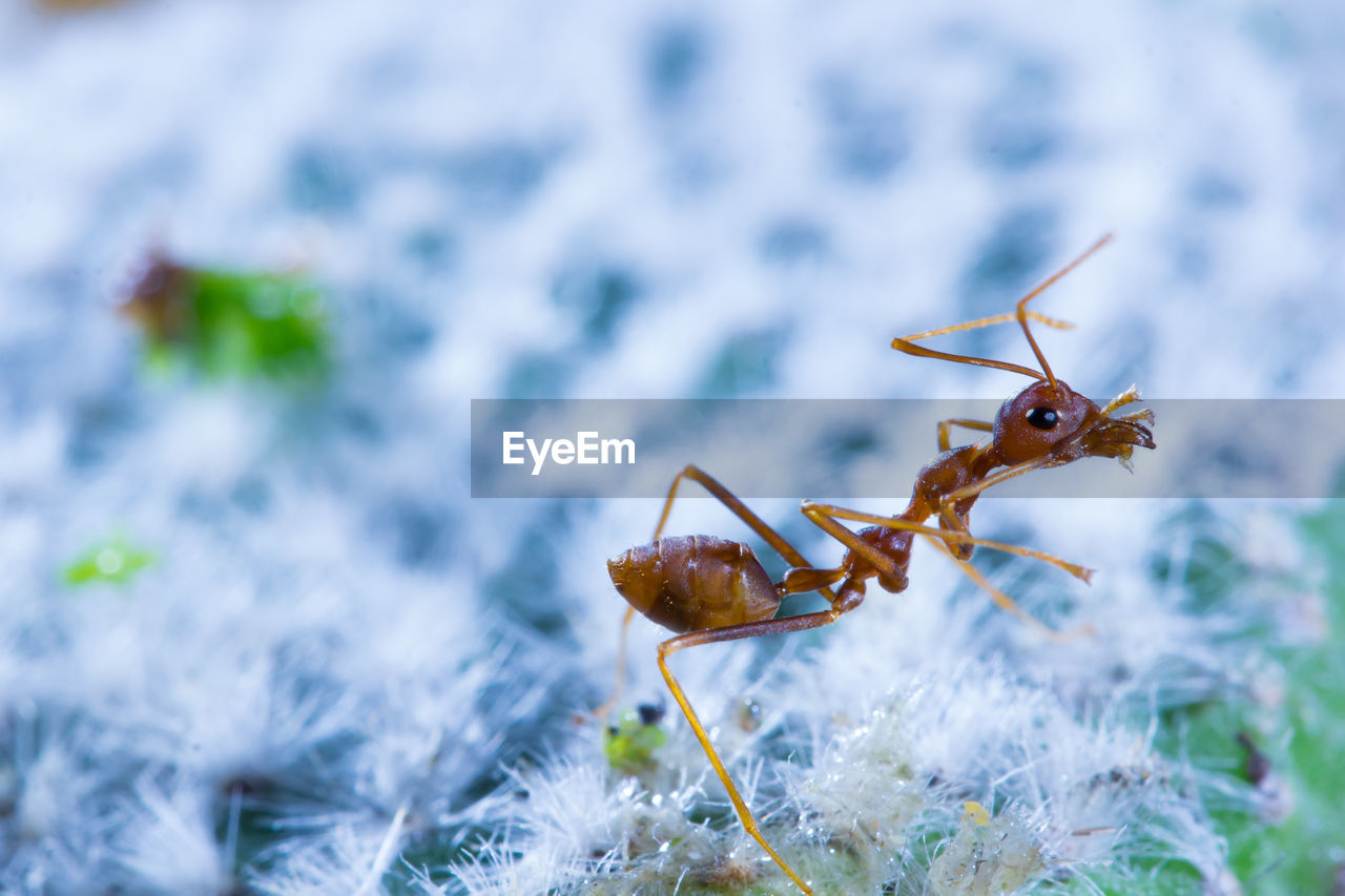 animals in the wild, invertebrate, animal wildlife, animal themes, animal, insect, close-up, one animal, day, no people, selective focus, nature, outdoors, focus on foreground, animal body part, zoology, plant, brown, ant