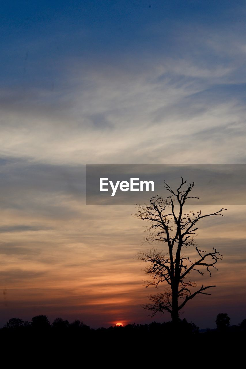 sunset, silhouette, tree, beauty in nature, tranquility, tranquil scene, orange color, bare tree, nature, lone, sky, scenics, outdoors, no people, branch, tree trunk, landscape