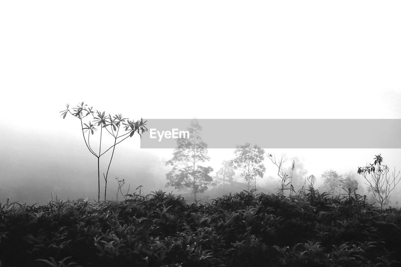nature, tree, growth, tranquility, tranquil scene, beauty in nature, plant, landscape, outdoors, no people, scenics, day, fog, mist, hazy, sky, grass