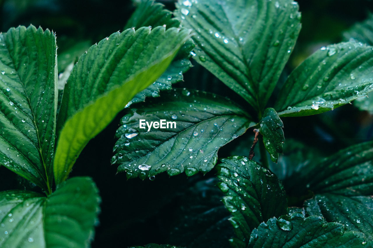 Close-Up Of Wet Plants During Monsoon