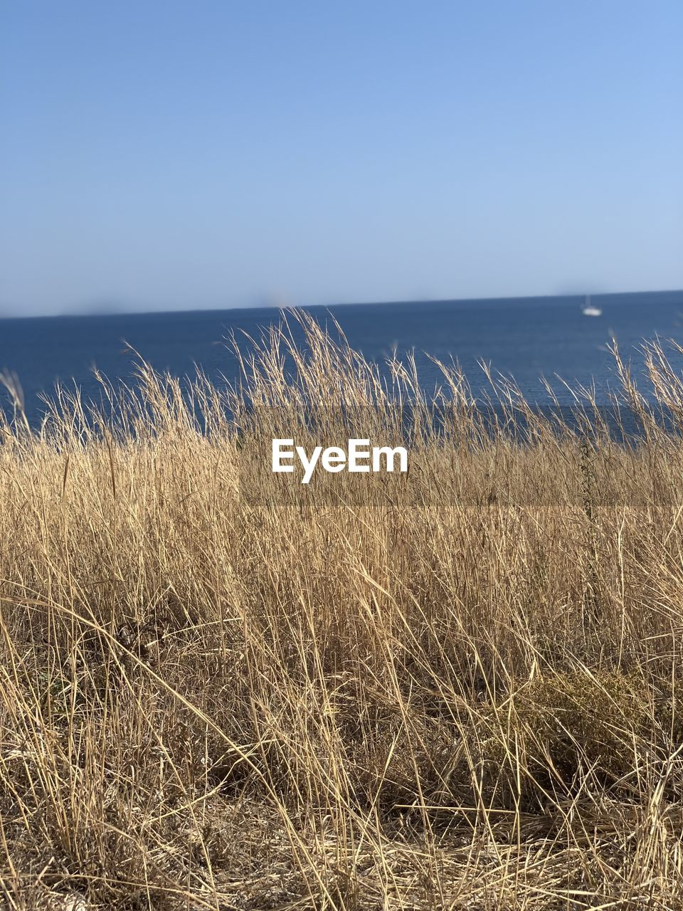sky, water, sea, beauty in nature, land, horizon, horizon over water, plant, tranquility, scenics - nature, beach, grass, tranquil scene, nature, growth, day, clear sky, no people, non-urban scene, outdoors, marram grass