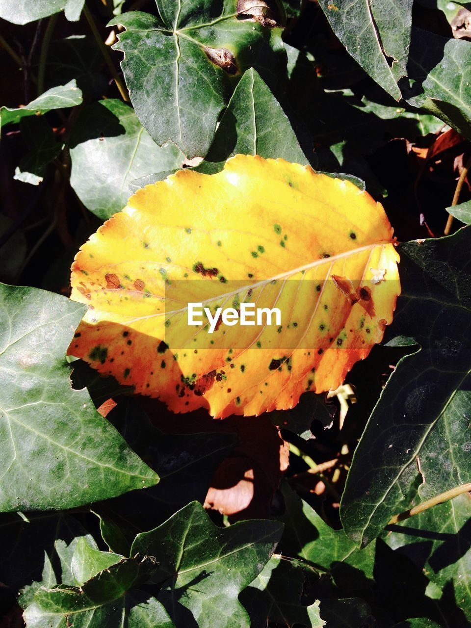 Close-up of orange leaf plants during autumn