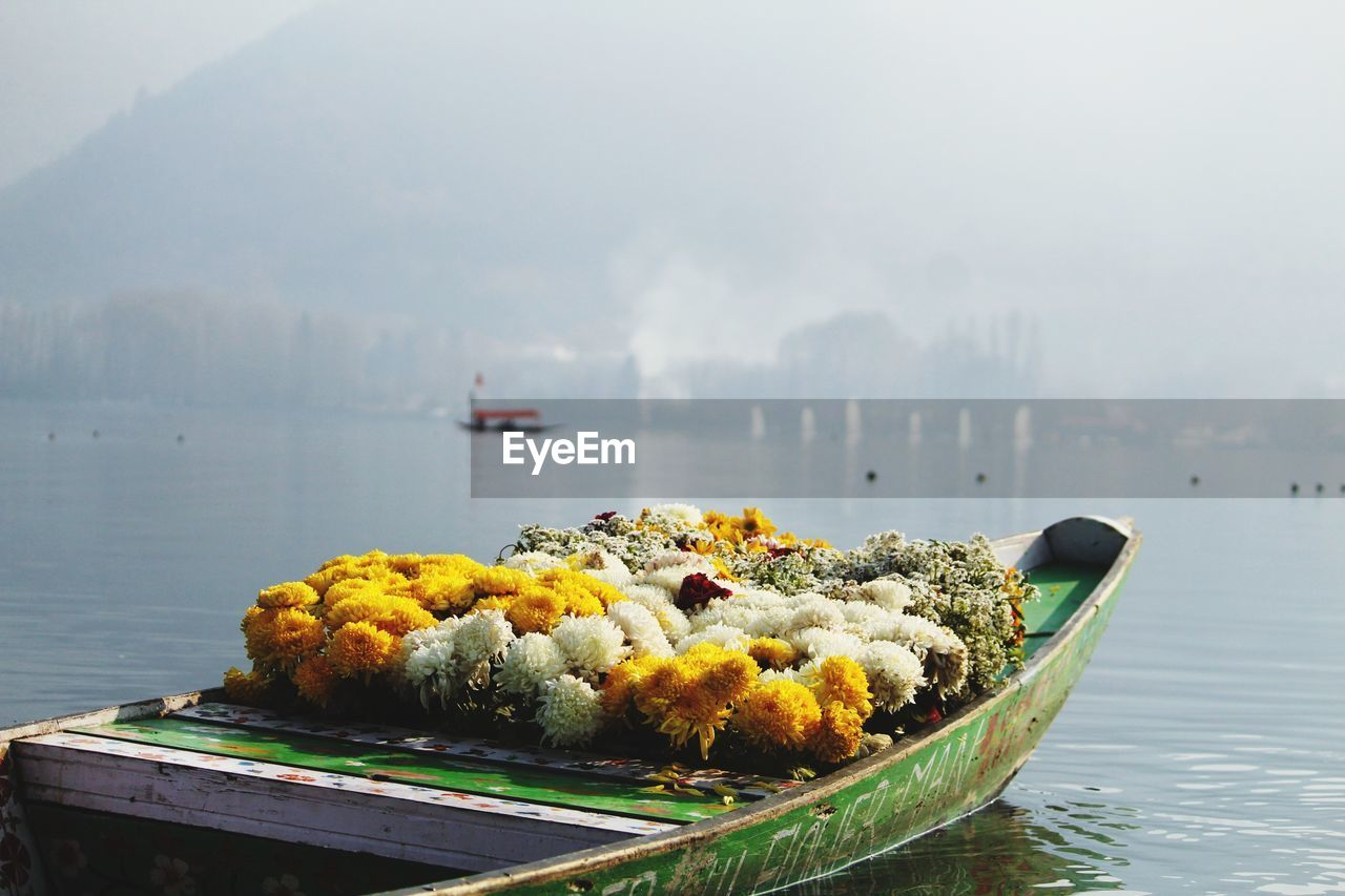 water, beauty in nature, no people, freshness, nature, sea, day, fragility, nautical vessel, outdoors, flower, sky, close-up