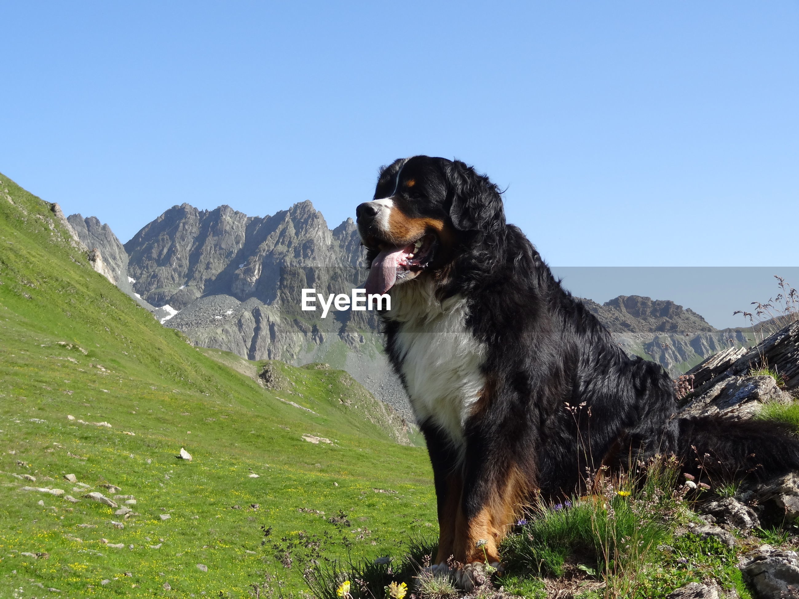 DOG SITTING ON GRASS AGAINST MOUNTAINS