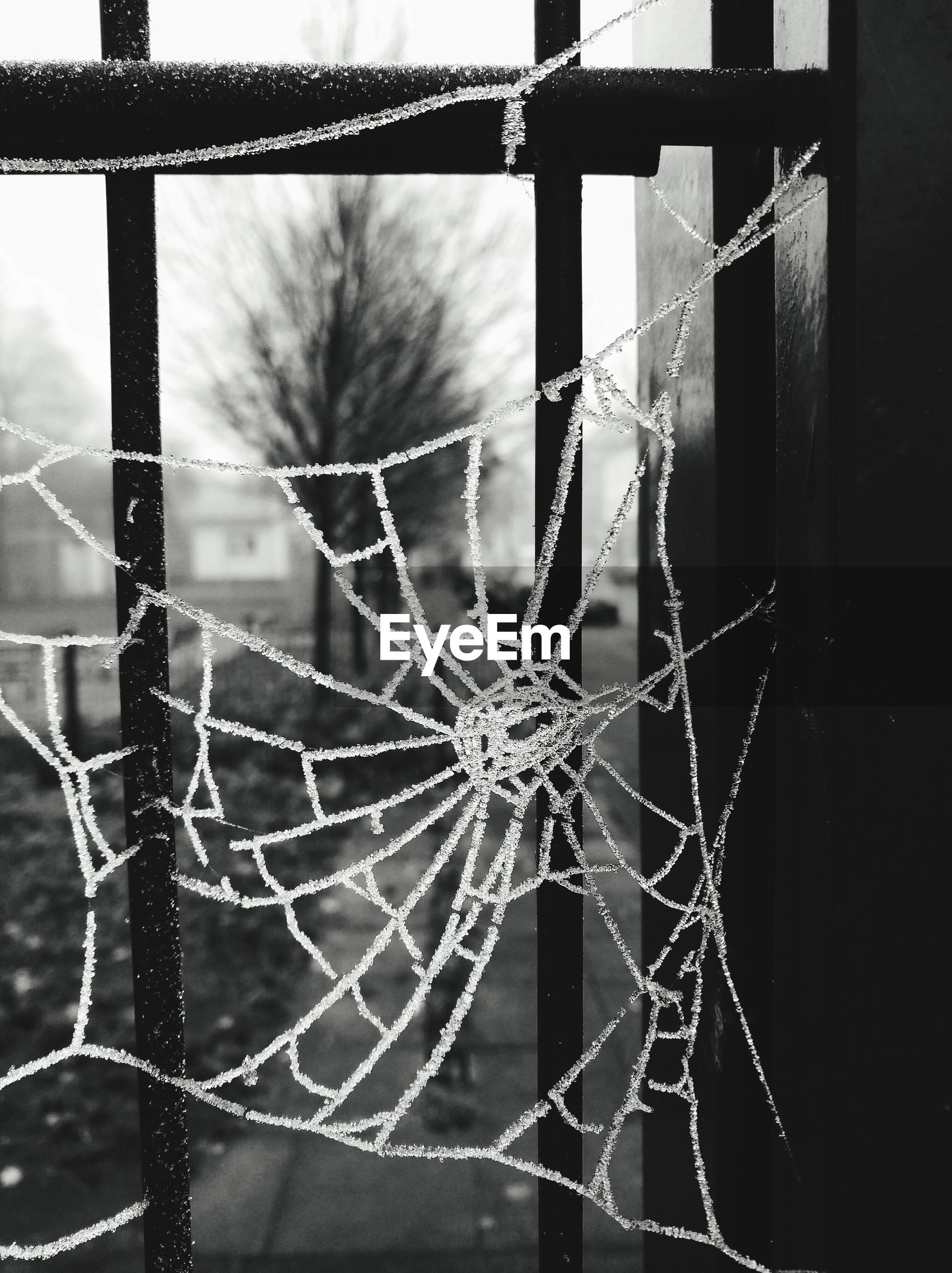 CLOSE-UP OF SPIDER WEB ON WINDOW AGAINST BLURRED BACKGROUND