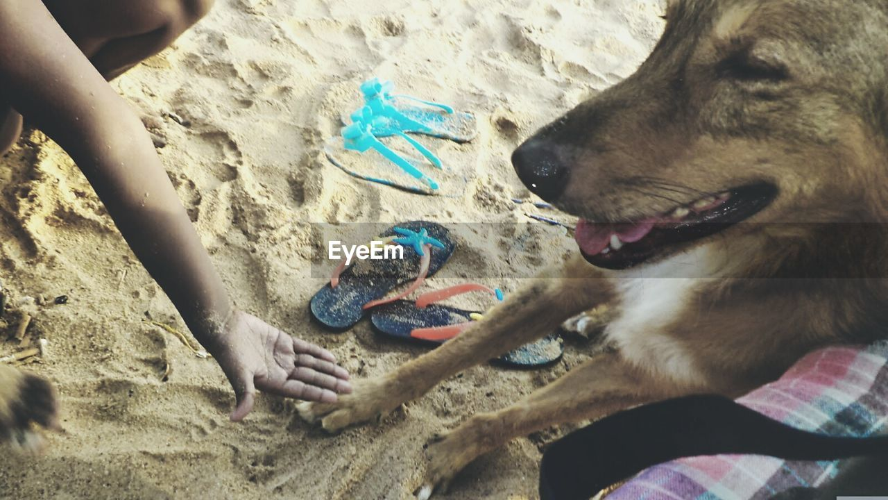 dog, sand, beach, real people, pets, one person, domestic animals, one animal, leisure activity, mammal, human hand, lifestyles, human body part, holding, day, outdoors, playing, vacations, men, childhood, sand pail and shovel, nature, close-up, people