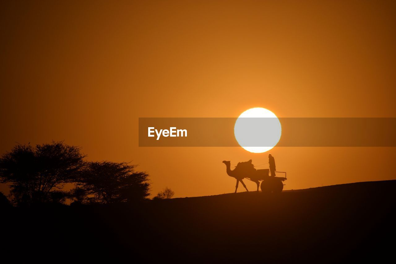 Silhouette Man Riding Camel Against Sky During Sunset