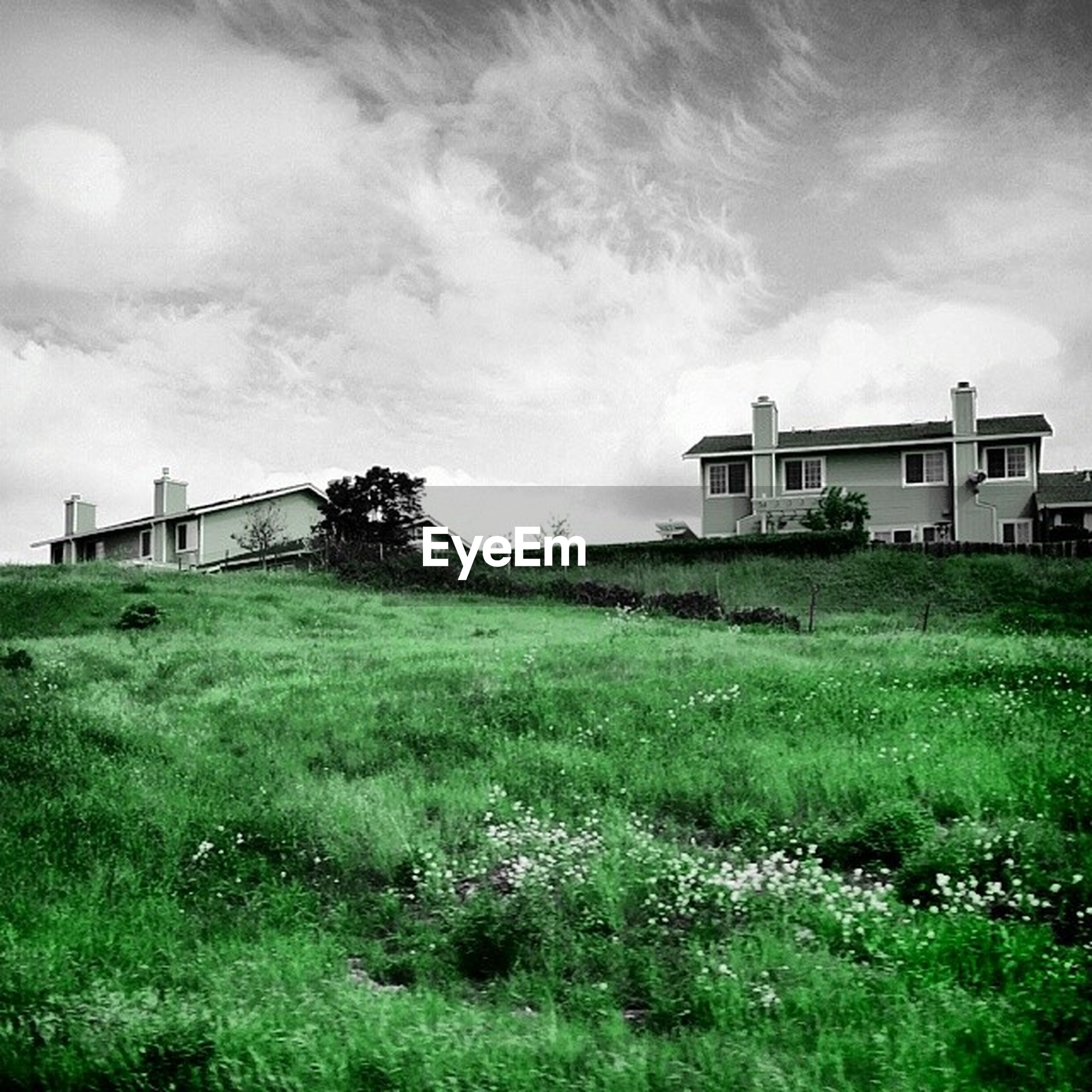 grass, building exterior, field, architecture, built structure, grassy, sky, green color, landscape, house, cloud - sky, nature, growth, lawn, day, rural scene, plant, grassland, outdoors, beauty in nature