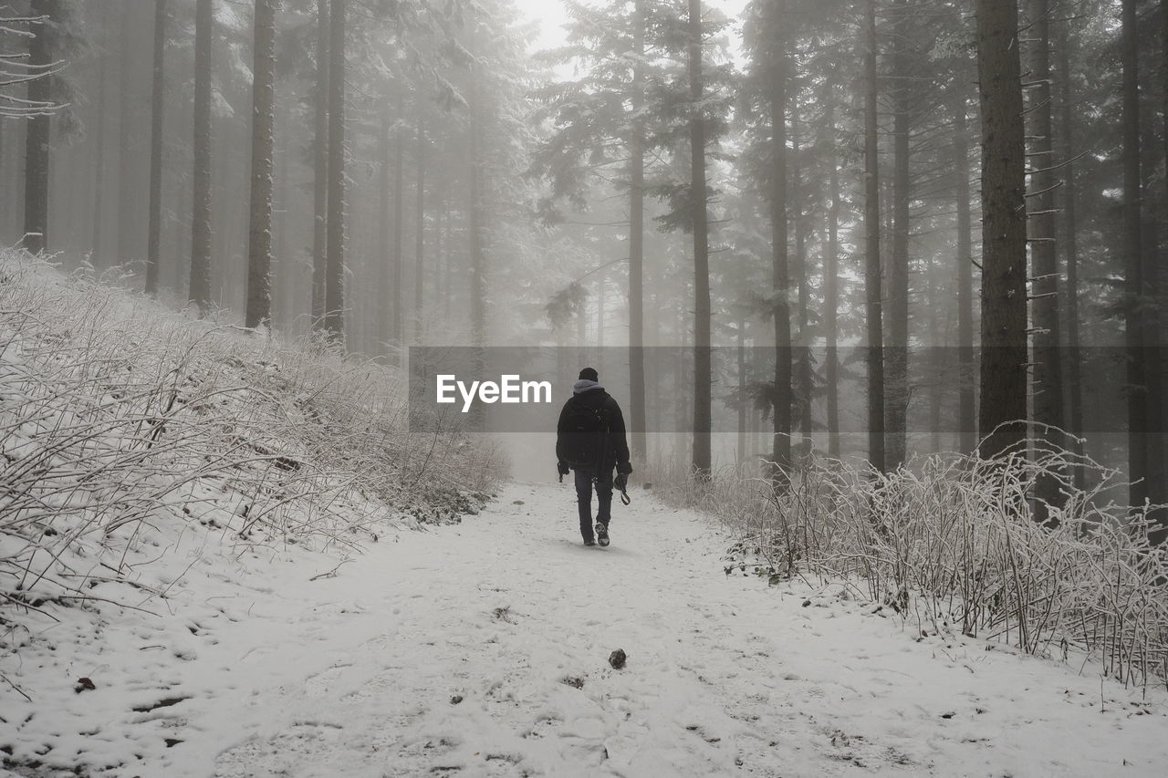tree, forest, cold temperature, winter, land, real people, one person, plant, snow, rear view, walking, woodland, lifestyles, leisure activity, fog, beauty in nature, nature, full length, direction, the way forward, warm clothing, outdoors