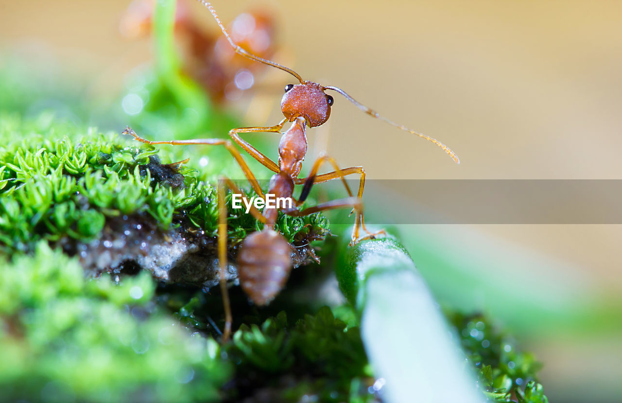 invertebrate, insect, animals in the wild, animal wildlife, animal themes, close-up, selective focus, animal, green color, one animal, plant part, no people, leaf, plant, day, nature, growth, ant, zoology, arthropod, outdoors