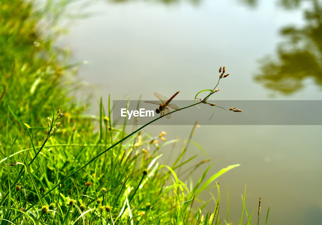 plant, growth, green color, nature, grass, beauty in nature, tranquility, day, selective focus, no people, focus on foreground, close-up, outdoors, land, water, fragility, vulnerability, field, leaf, freshness, blade of grass