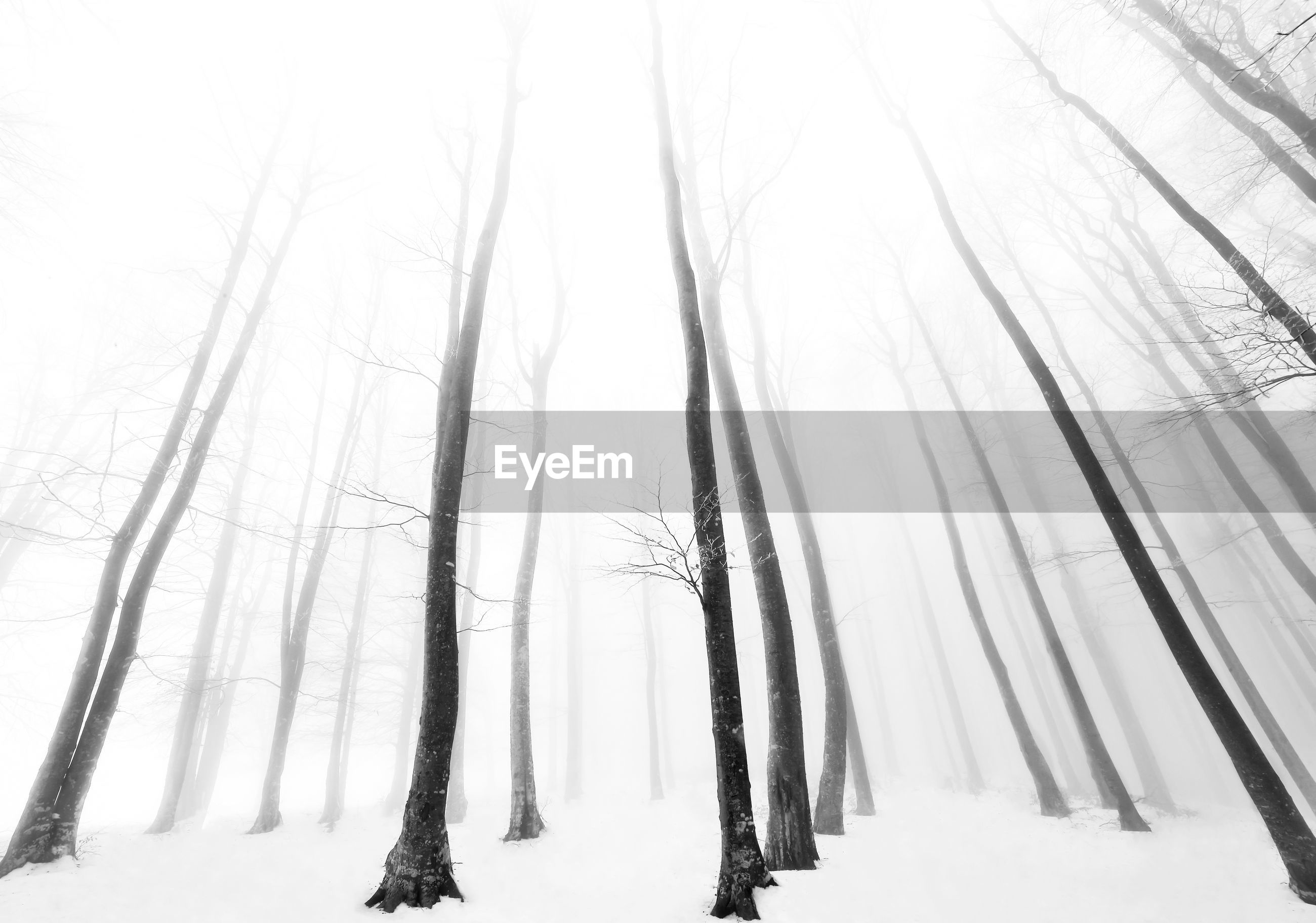 BARE TREES ON SNOW COVERED LANDSCAPE IN WINTER