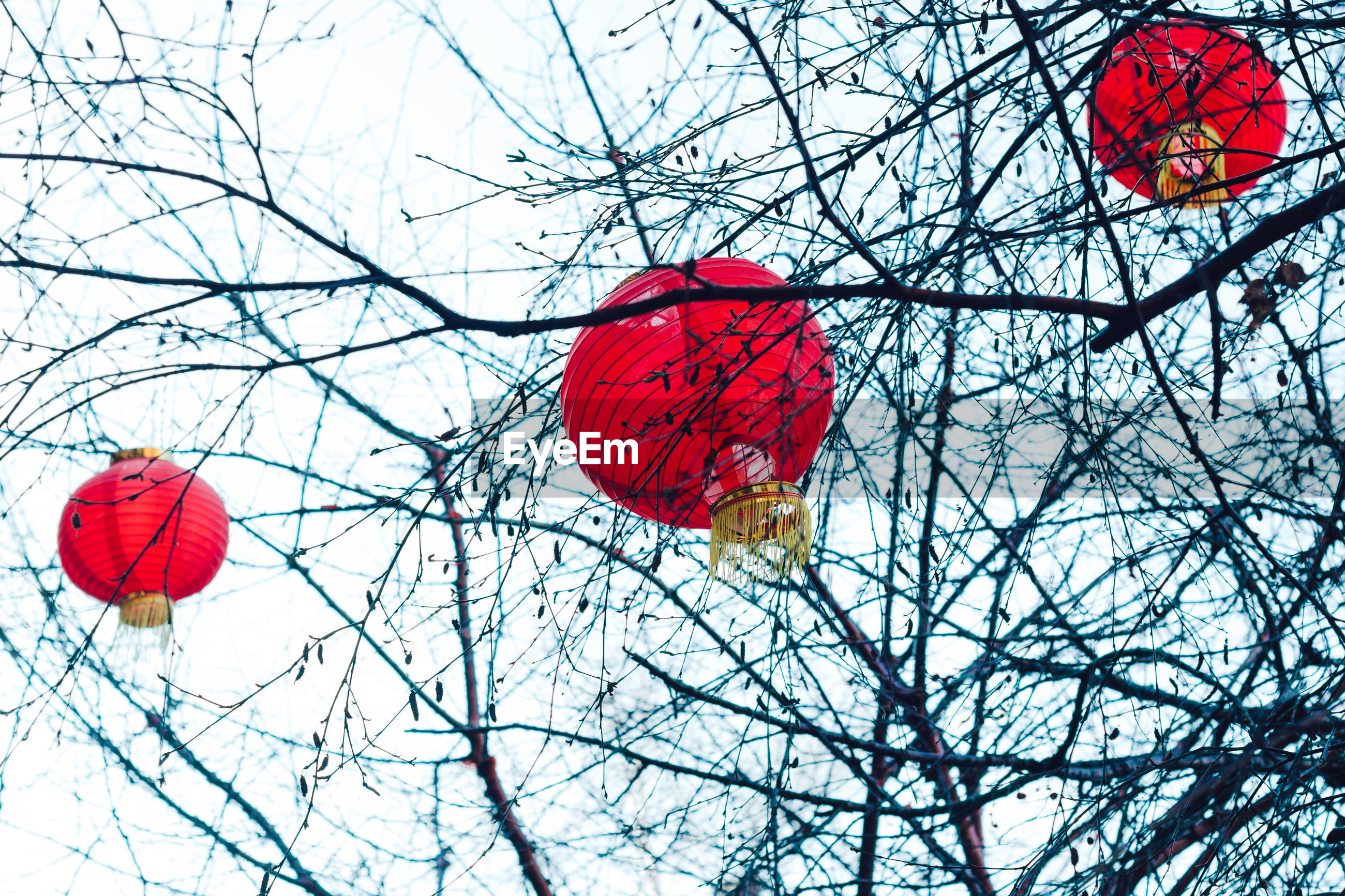 Low angle view of red lantern hanging on tree against sky