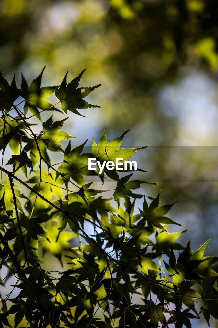 plant, plant part, growth, leaf, beauty in nature, no people, nature, tree, low angle view, green color, branch, focus on foreground, close-up, yellow, day, outdoors, selective focus, leaves, tranquility, sky, spiky