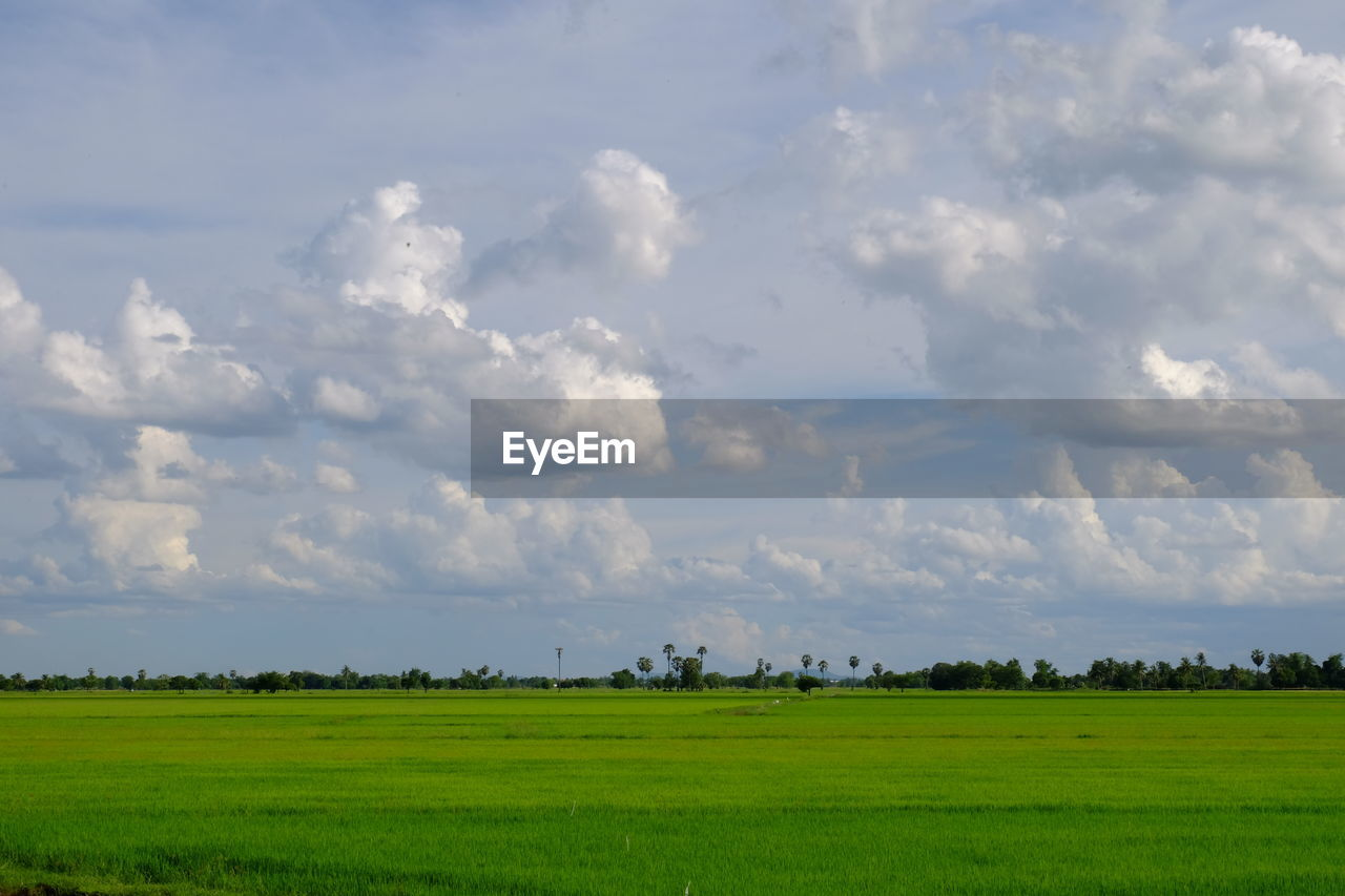 cloud - sky, landscape, sky, environment, tranquil scene, green color, land, scenics - nature, tranquility, beauty in nature, field, plant, nature, grass, day, non-urban scene, no people, rural scene, growth, outdoors