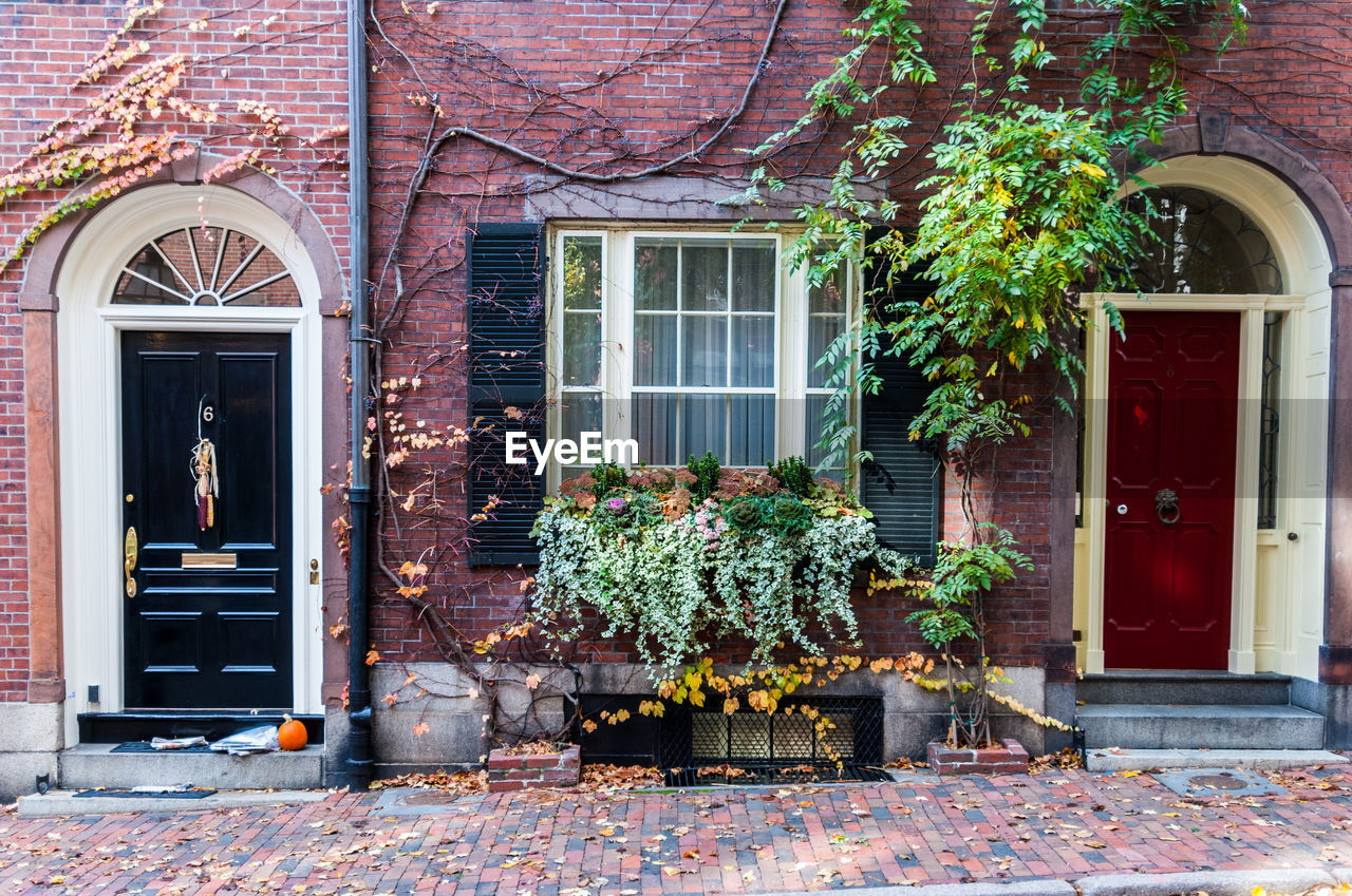 building exterior, architecture, built structure, building, window, plant, house, door, nature, entrance, day, no people, residential district, outdoors, flower, flowering plant, facade, tree, leaf, growth, brick