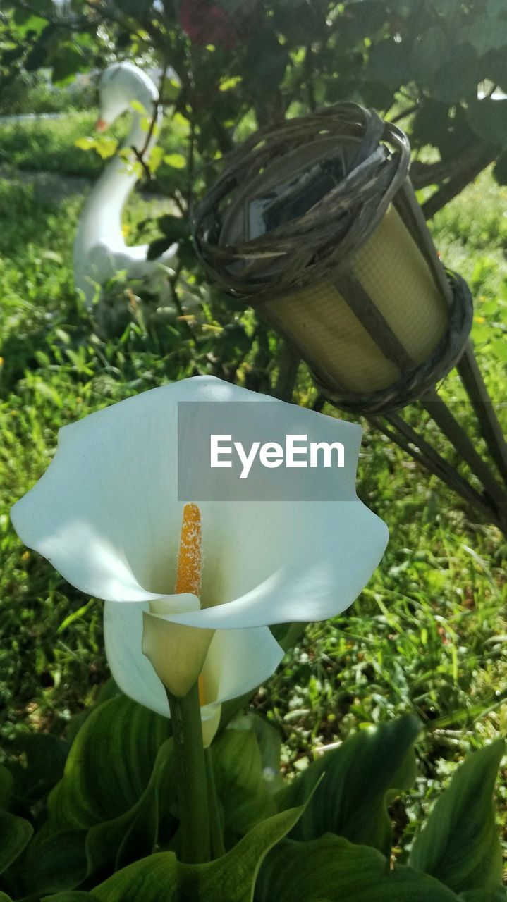 growth, nature, flower, plant, beauty in nature, petal, no people, outdoors, day, green color, freshness, fragility, flower head, leaf, close-up, tree