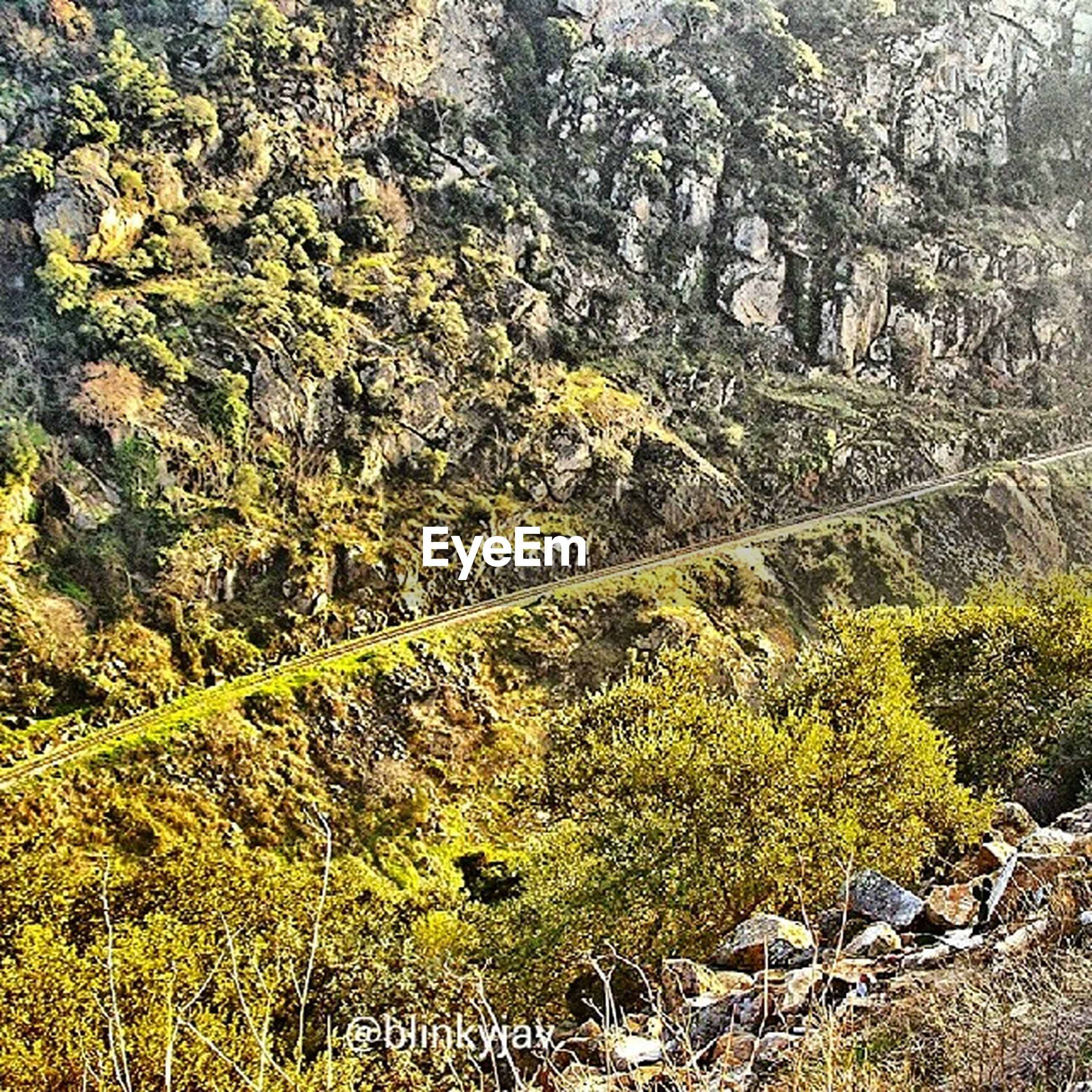 tree, growth, nature, rock - object, plant, tranquility, high angle view, green color, beauty in nature, tranquil scene, moss, day, forest, scenics, landscape, outdoors, no people, built structure, field, non-urban scene