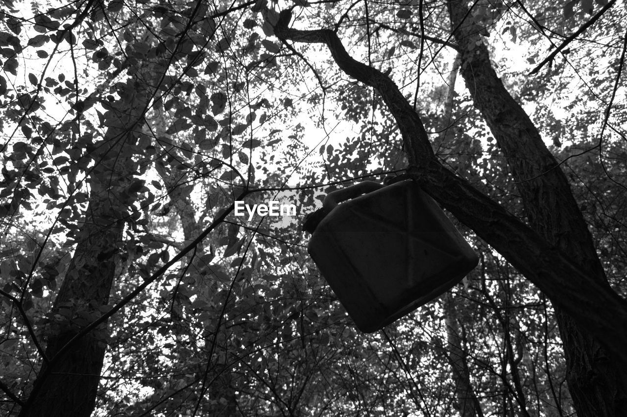 tree, branch, low angle view, tree trunk, growth, hanging, day, nature, outdoors, no people, beauty in nature