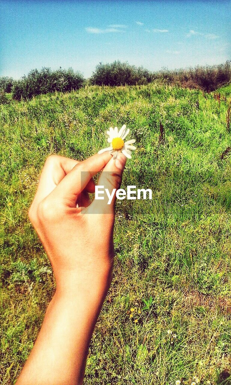 grass, human body part, one person, human hand, field, real people, nature, personal perspective, plant, growth, outdoors, summer, lifestyles, flower, beauty in nature, women, day, close-up, sky, people