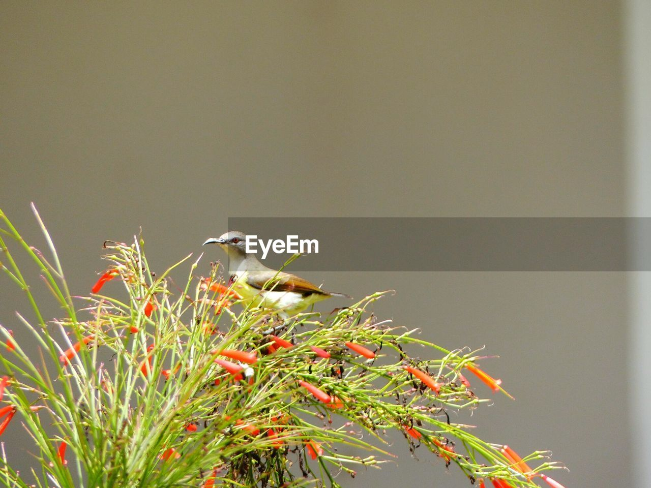Bird Perching On Plant Against Wall