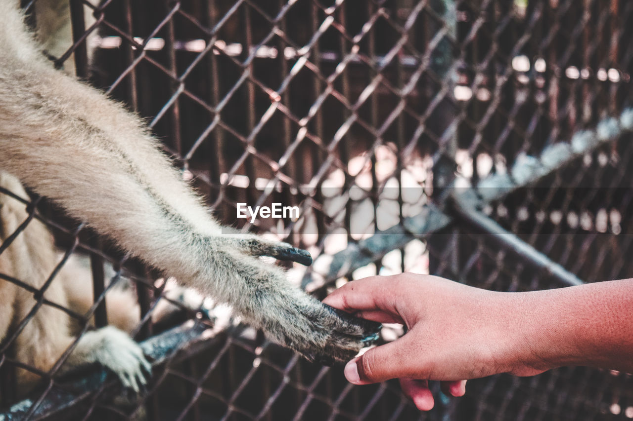 Close-up of human hand holding chainlink fence at zoo