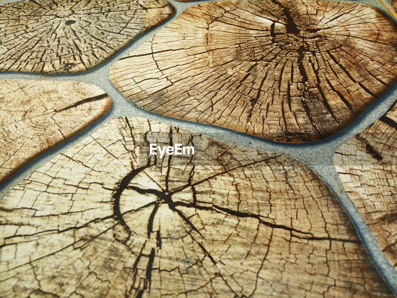 tree ring, cracked, wood - material, tree stump, deforestation, full frame, lumber industry, cross section, nature, textured, environmental issues, day, close-up, backgrounds, no people, tree, outdoors