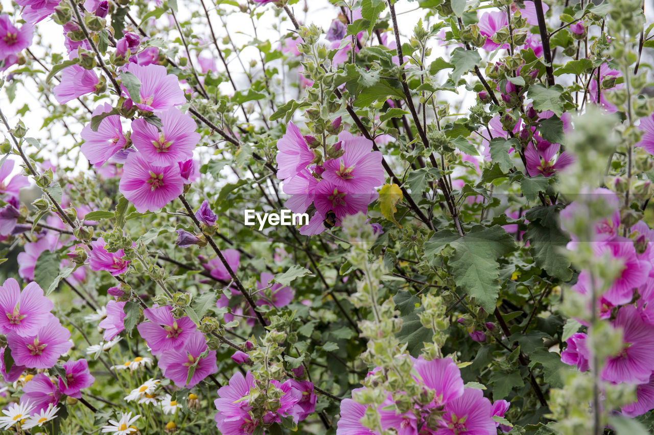 flower, growth, plant, nature, no people, beauty in nature, fragility, outdoors, blooming, day, freshness, flower head