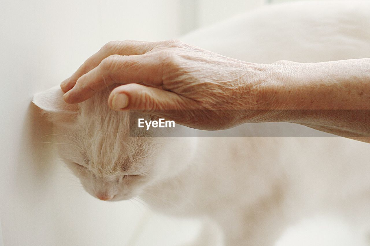 Cropped Hand Petting Cat By Wall
