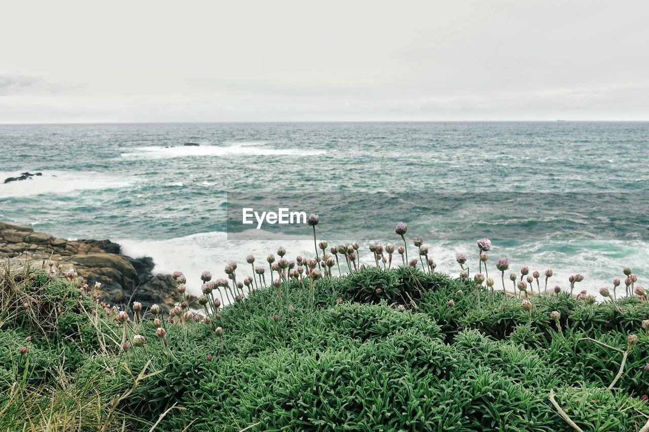 sea, water, horizon, horizon over water, sky, beauty in nature, scenics - nature, land, plant, nature, grass, day, beach, group of animals, no people, vertebrate, tranquil scene, idyllic, bird