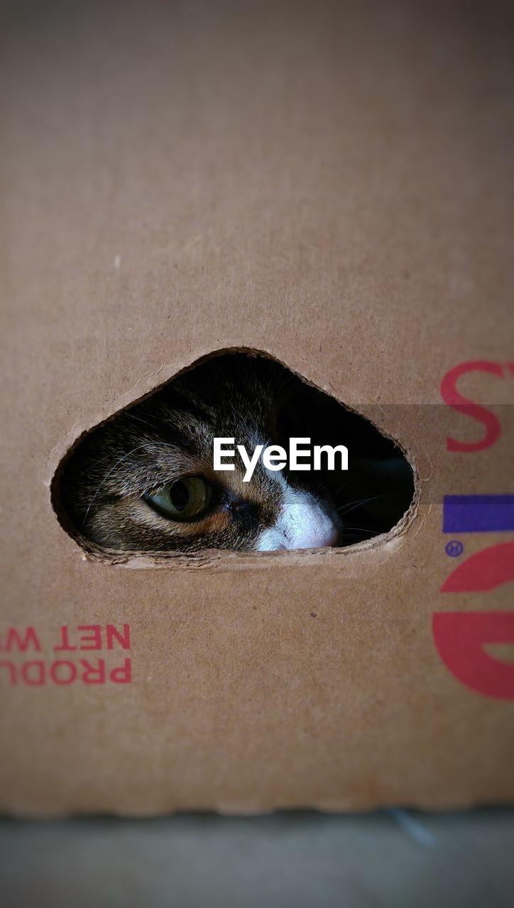 Cat Seen Through Box Hole