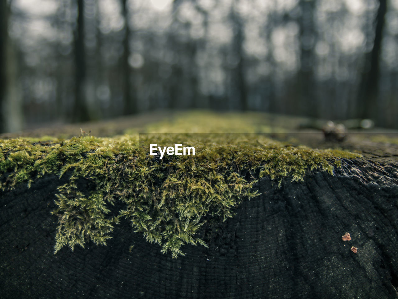 plant, tree, growth, tree trunk, trunk, land, nature, forest, green color, no people, day, focus on foreground, beauty in nature, moss, close-up, tranquility, outdoors, wood - material, selective focus, bark, woodland, lichen