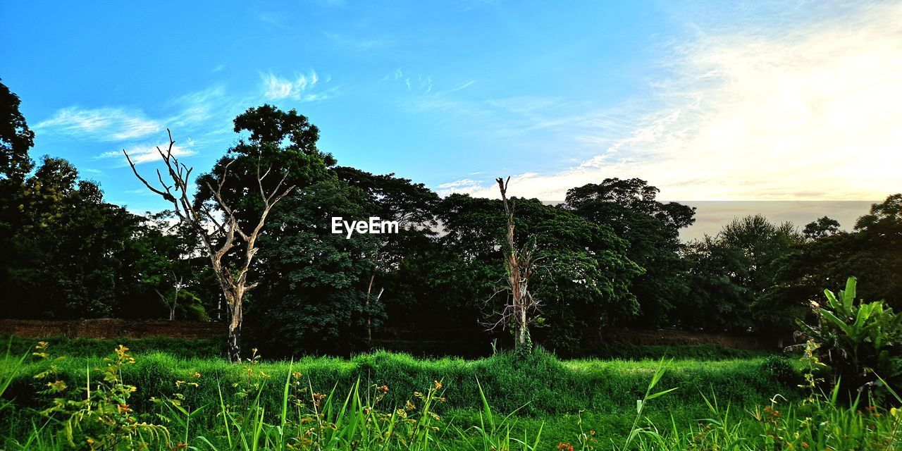 plant, tree, sky, growth, land, tranquility, beauty in nature, cloud - sky, green color, tranquil scene, nature, field, grass, scenics - nature, landscape, environment, no people, day, non-urban scene, outdoors