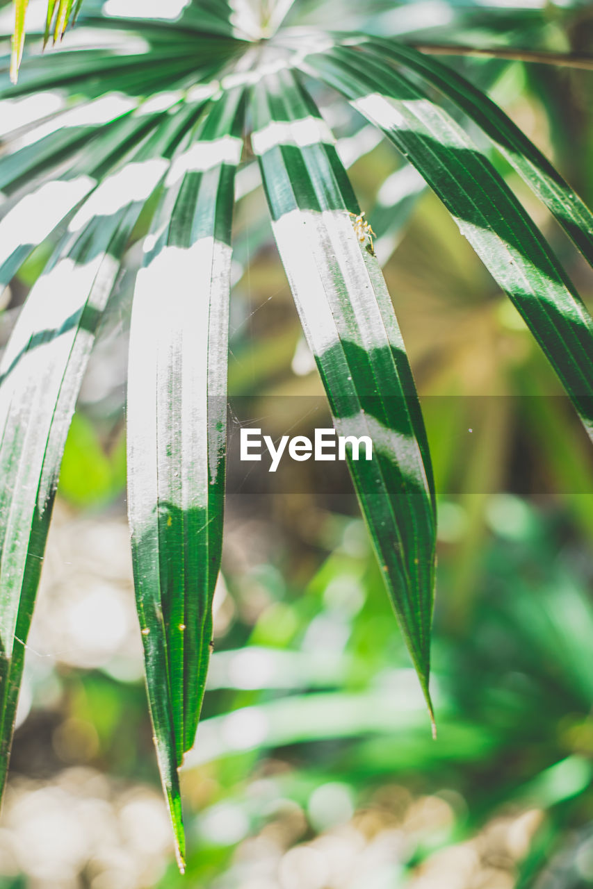 green color, growth, close-up, focus on foreground, plant, nature, day, no people, water, leaf, grass, plant part, beauty in nature, tranquility, outdoors, blade of grass, drop, wet, sunlight, bamboo - plant, raindrop, palm leaf, dew