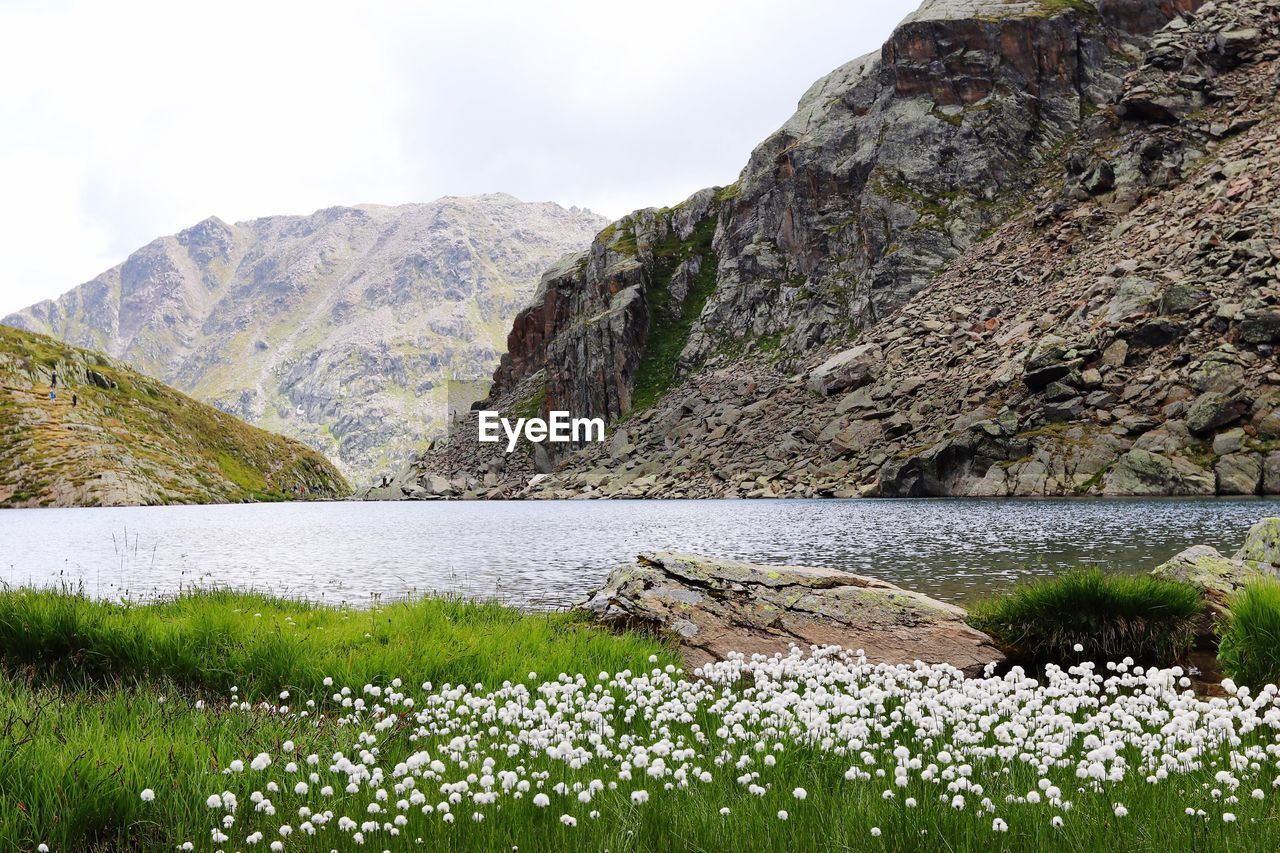 beauty in nature, mountain, water, tranquil scene, scenics - nature, plant, tranquility, nature, flower, mountain range, day, lake, no people, non-urban scene, flowering plant, sky, idyllic, growth, remote, outdoors, formation