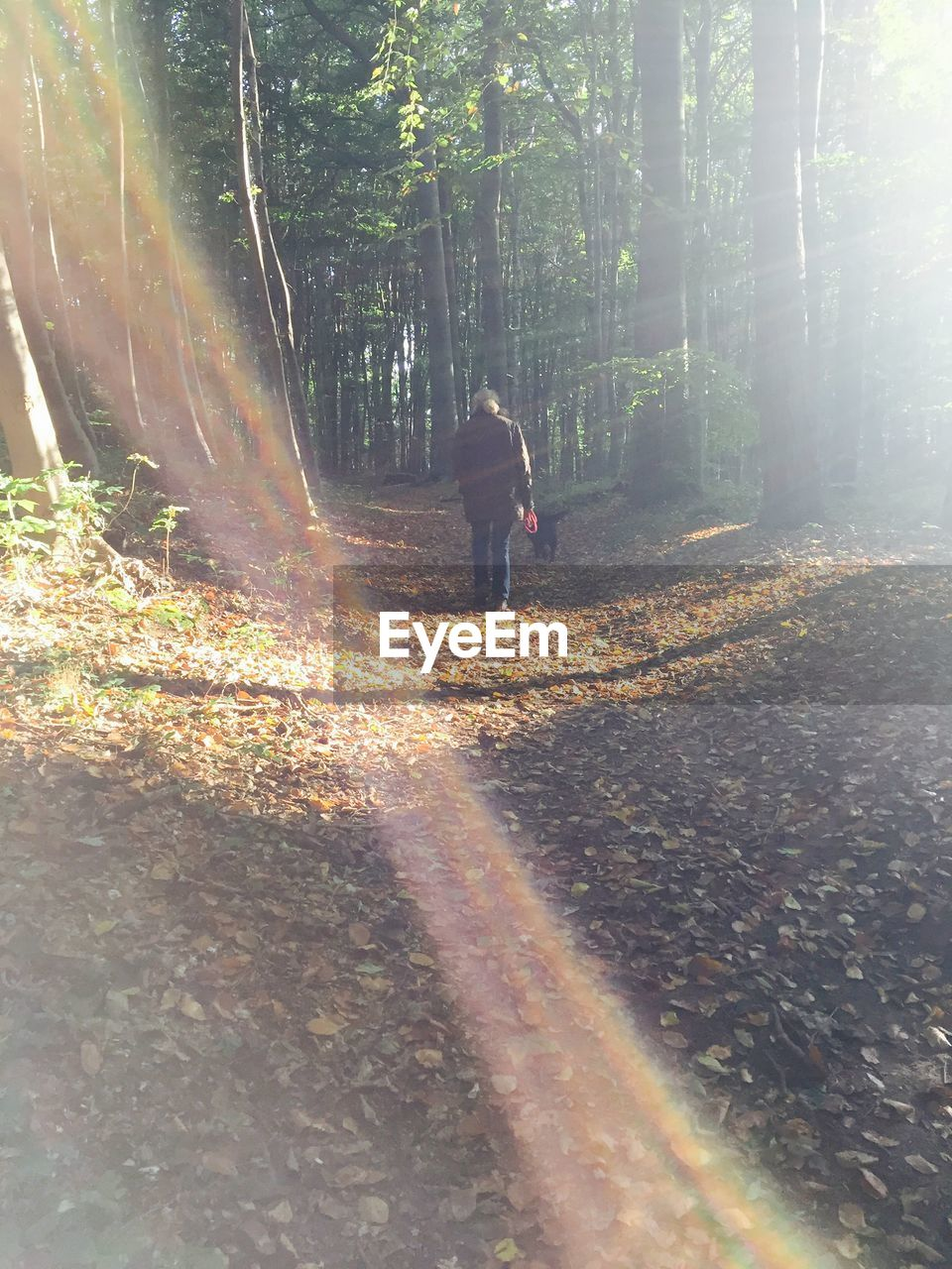 tree, sunbeam, the way forward, sunlight, full length, one person, rear view, walking, nature, forest, lens flare, autumn, road, day, real people, leaf, tranquility, outdoors, transportation, standing, growth, beauty in nature, lifestyles, men, people