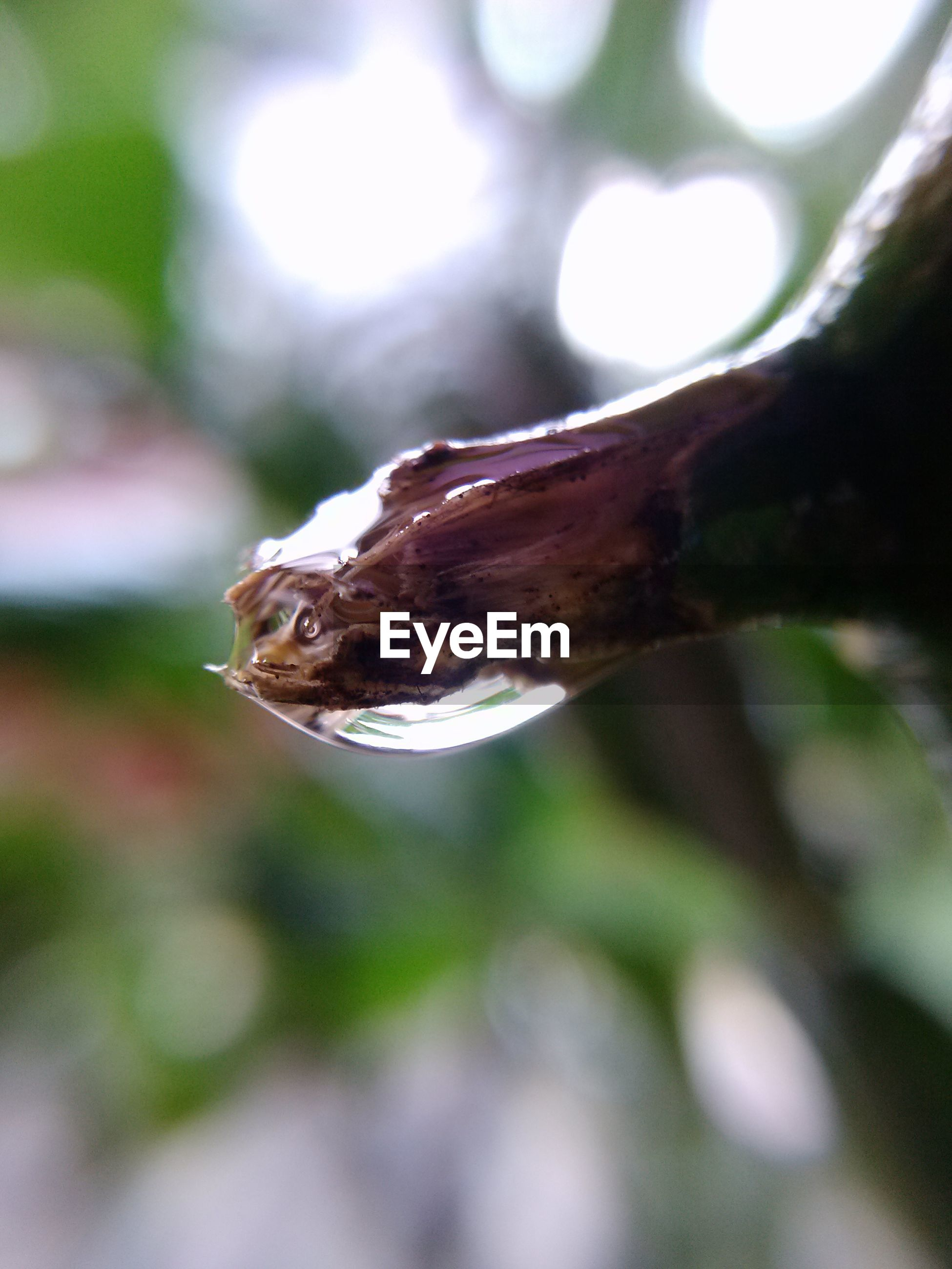 focus on foreground, close-up, selective focus, leaf, nature, dry, day, outdoors, natural pattern, forest, no people, tree, wood - material, brown, branch, leaf vein, tree trunk, growth, fragility, sunlight